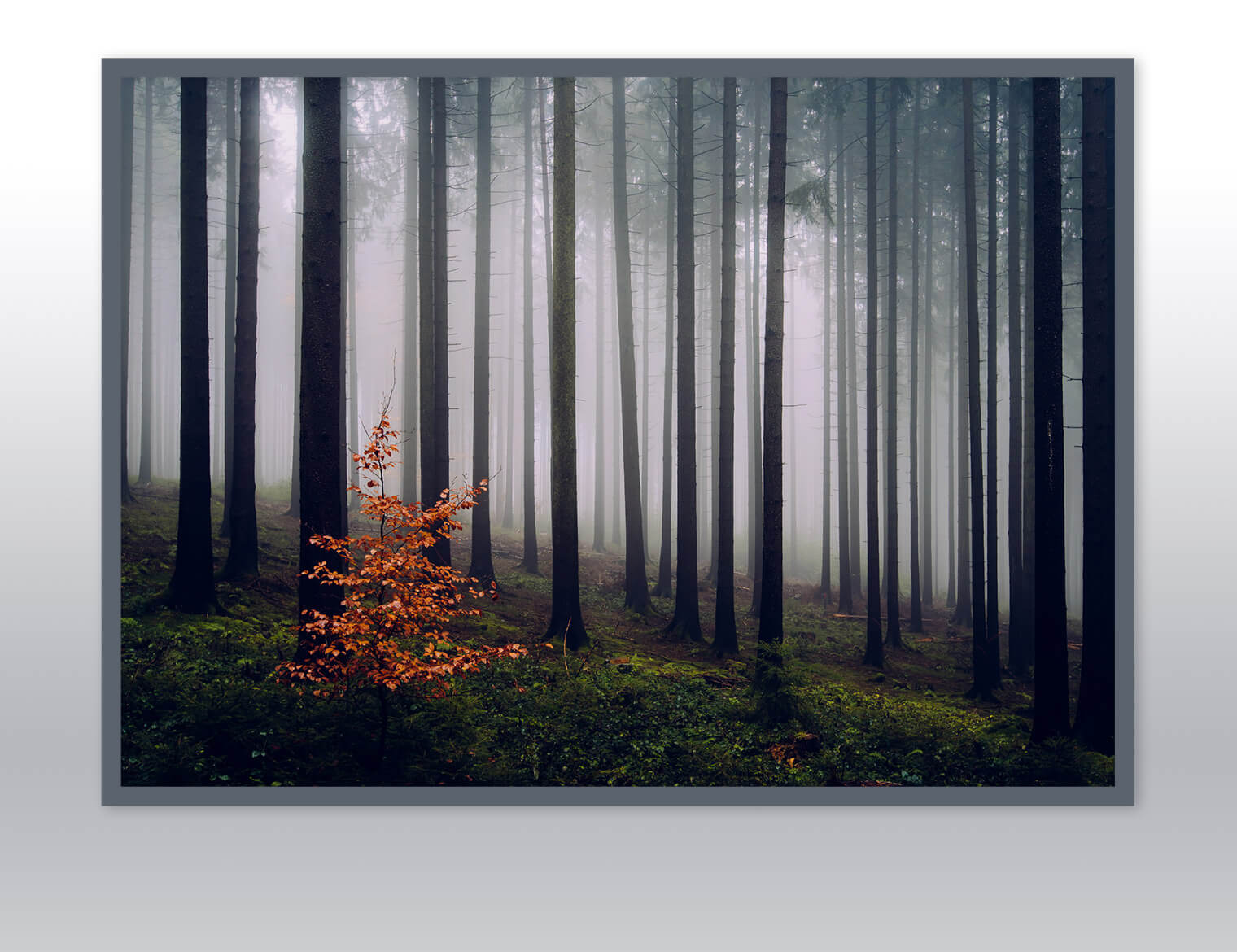 Gallery-quality Fine Art Prints by Northlandscapes