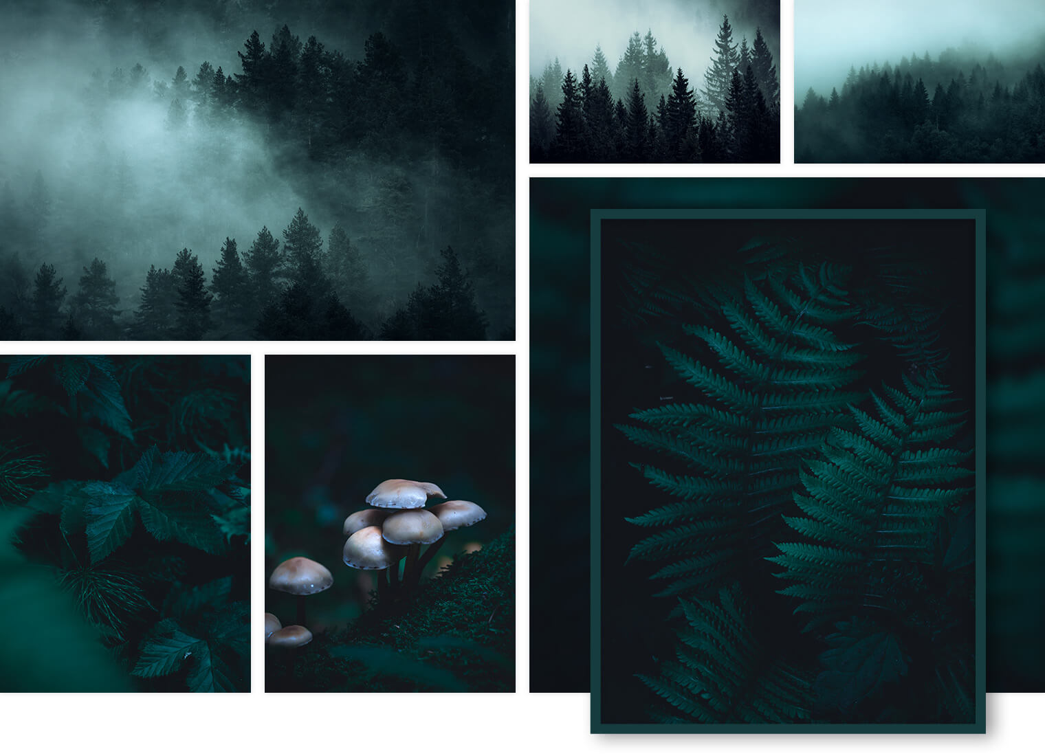 Moody Forest Landscape Photography for Interior Design