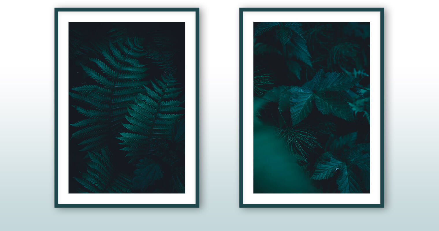 Fine Art Prints of Moody Forest