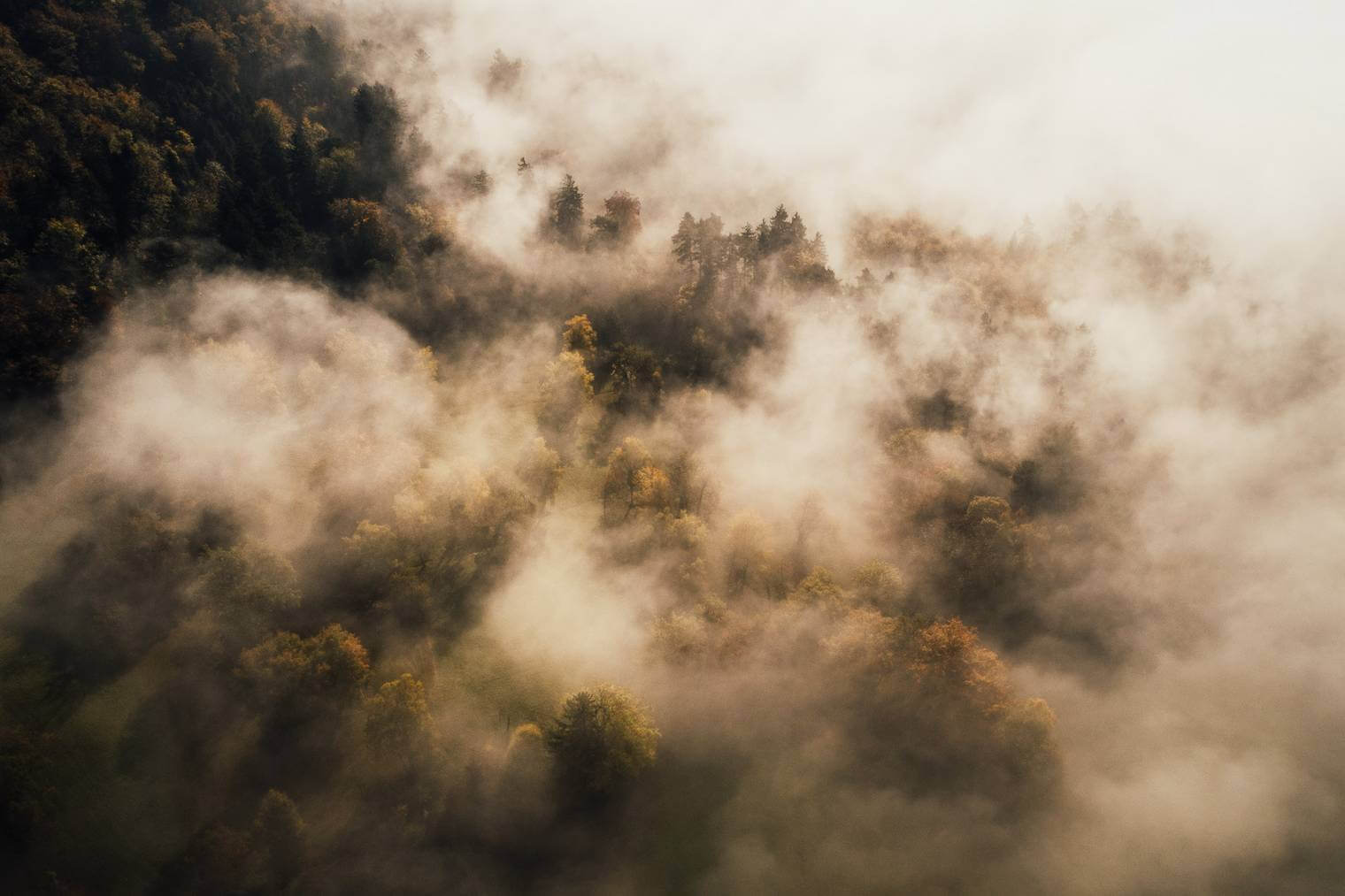 Forest in Morning Fog from Aerial Perspective
