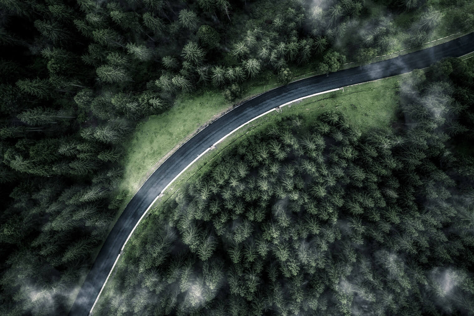 Aerial Photo of Moody Forest with Road