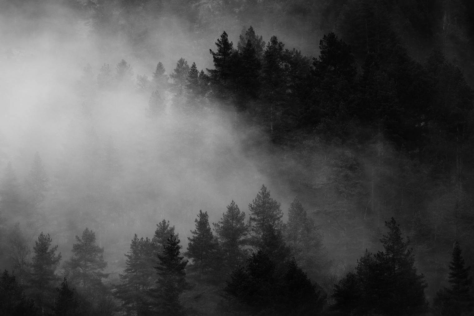 Forest in Black and White Tones