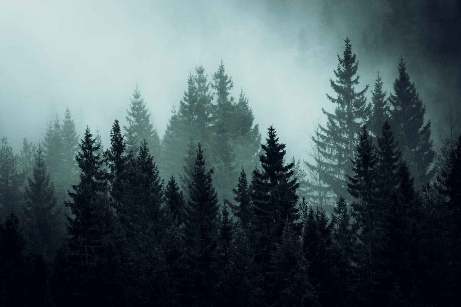 Dark and Moody Forest Landscape