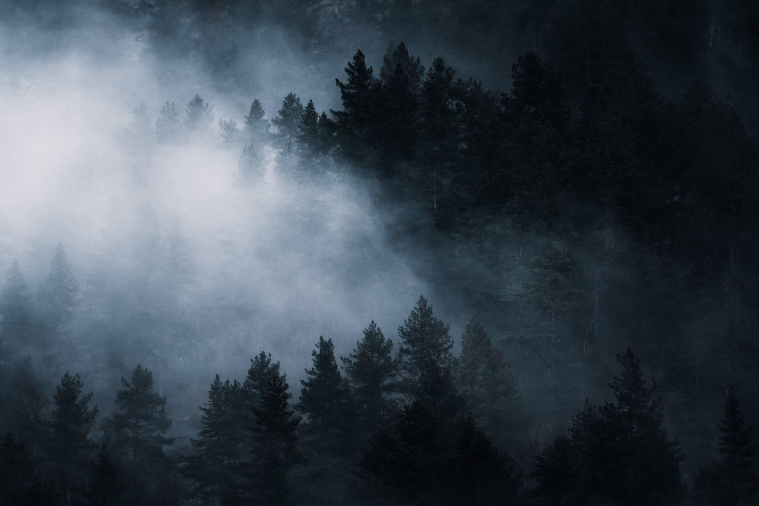 Dark and moody forest scene