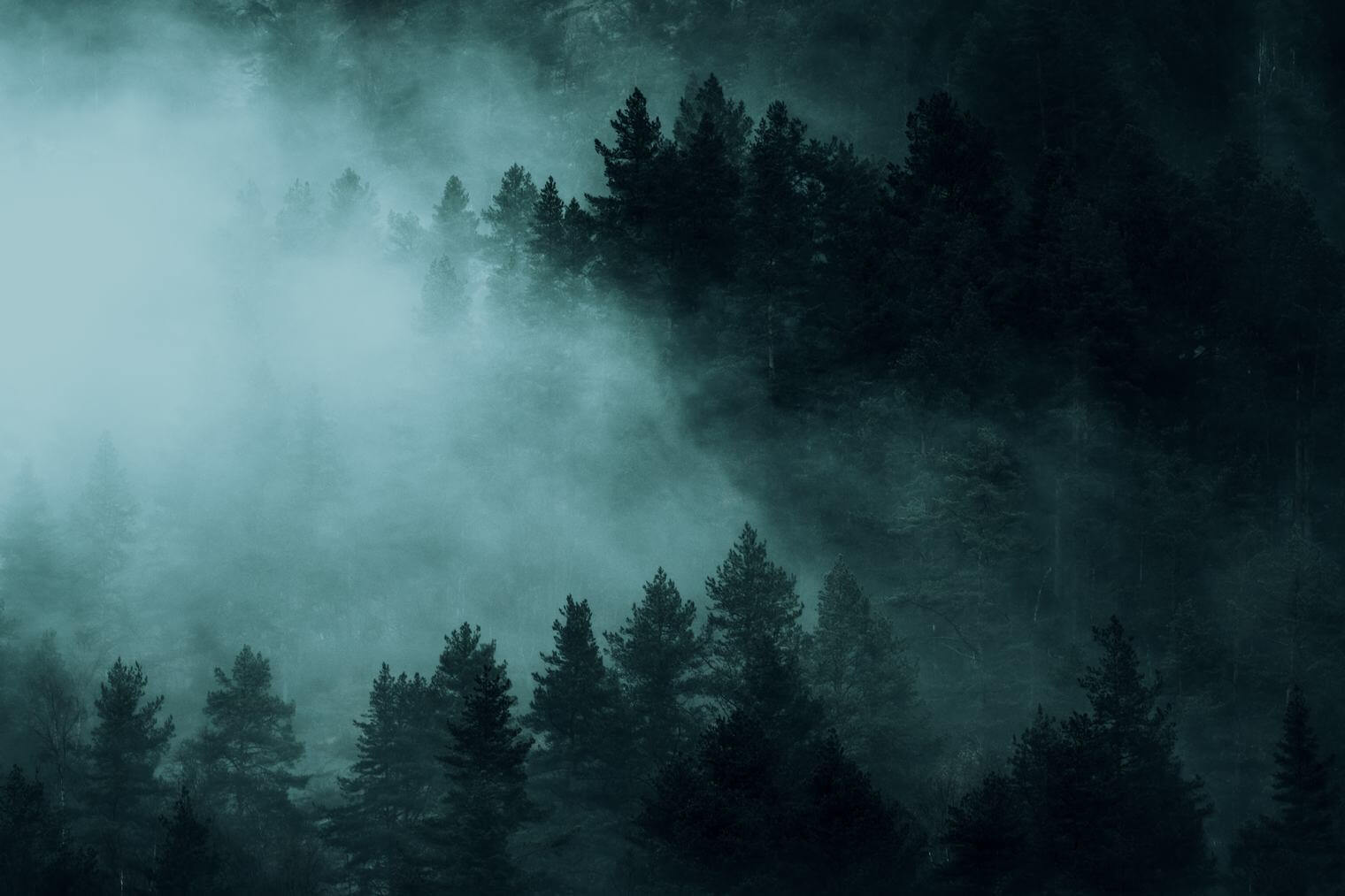 Dark and moody forest in the mountains