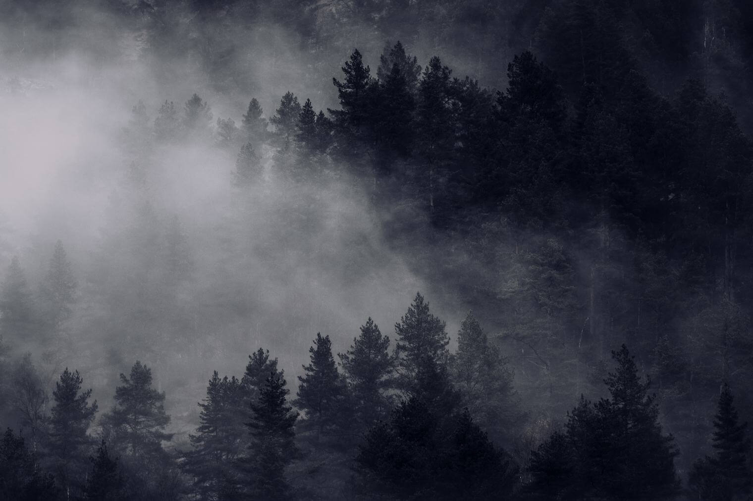 Foggy forest with clouds