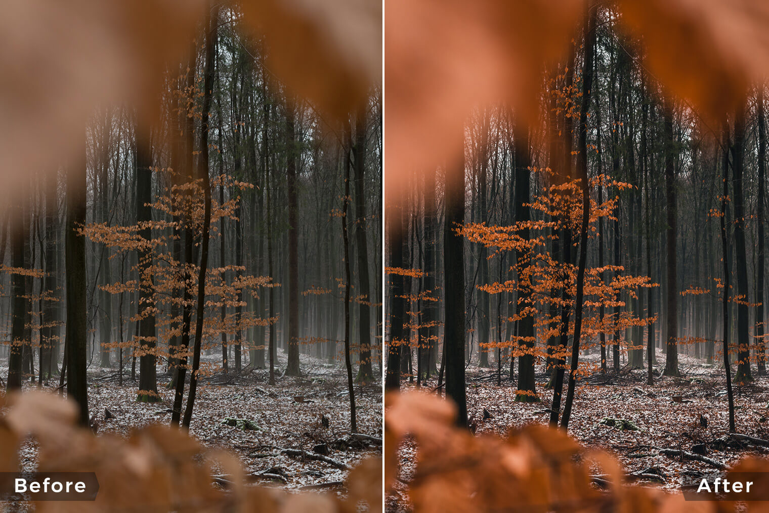 Moody Forest Lightroom Presets