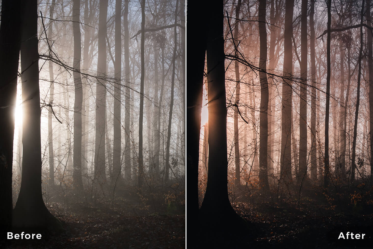 Dark and Moody Forest Lightroom Presets