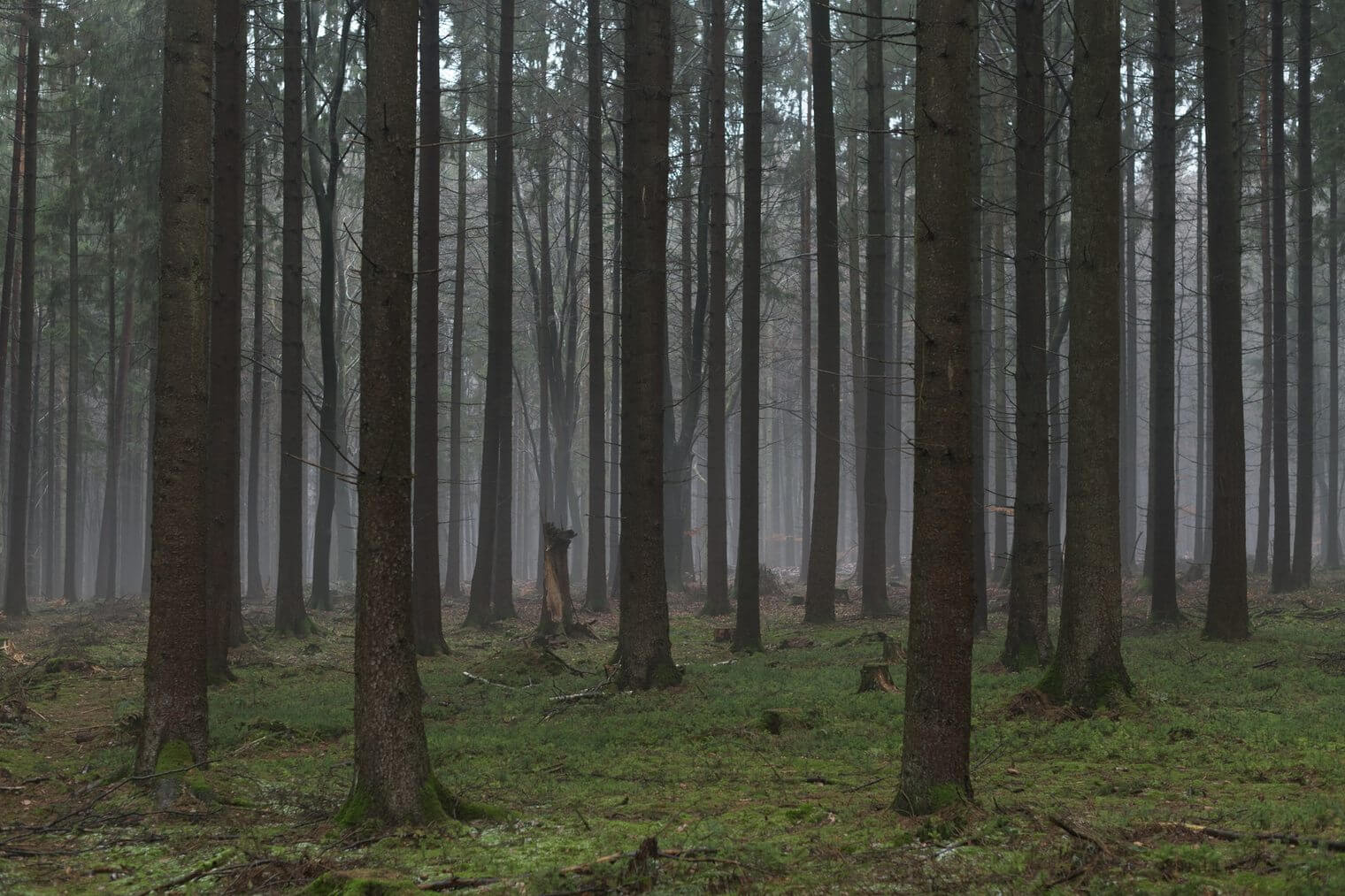 Unedited Forest Image