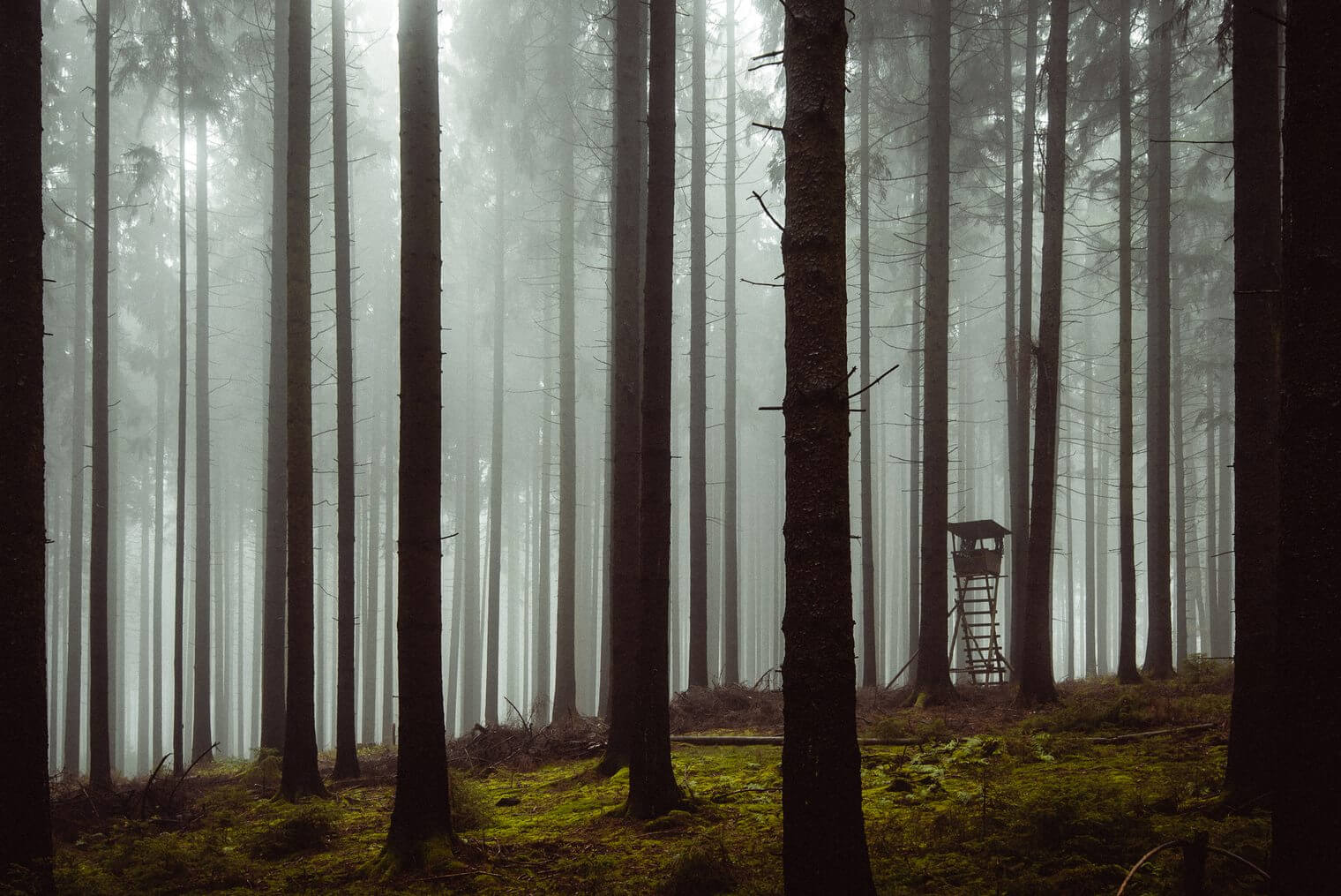 Moody and Foggy Forest Lightroom Presets