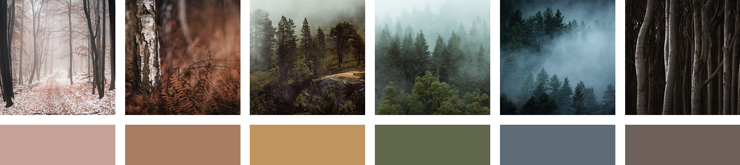 Moody Forest Landscapes
