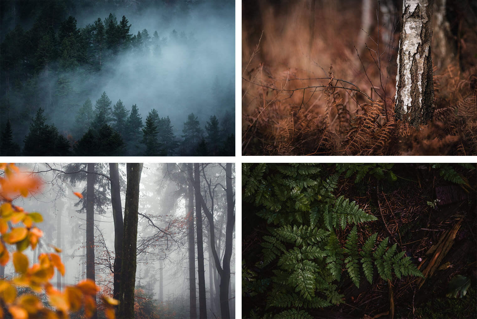 Lightroom Presets for Forest Landscapes - Example Photos