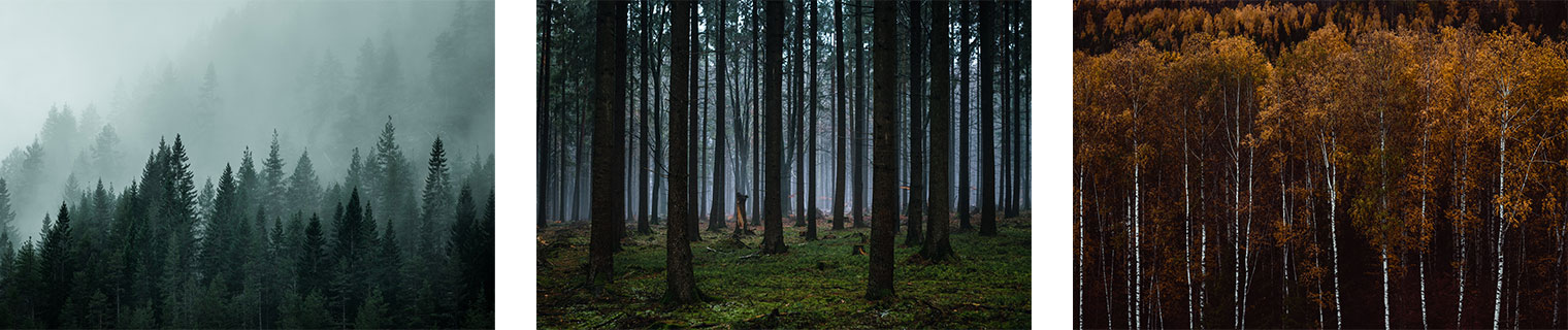 How To Photograph Forest Landscapes Northlandscapes