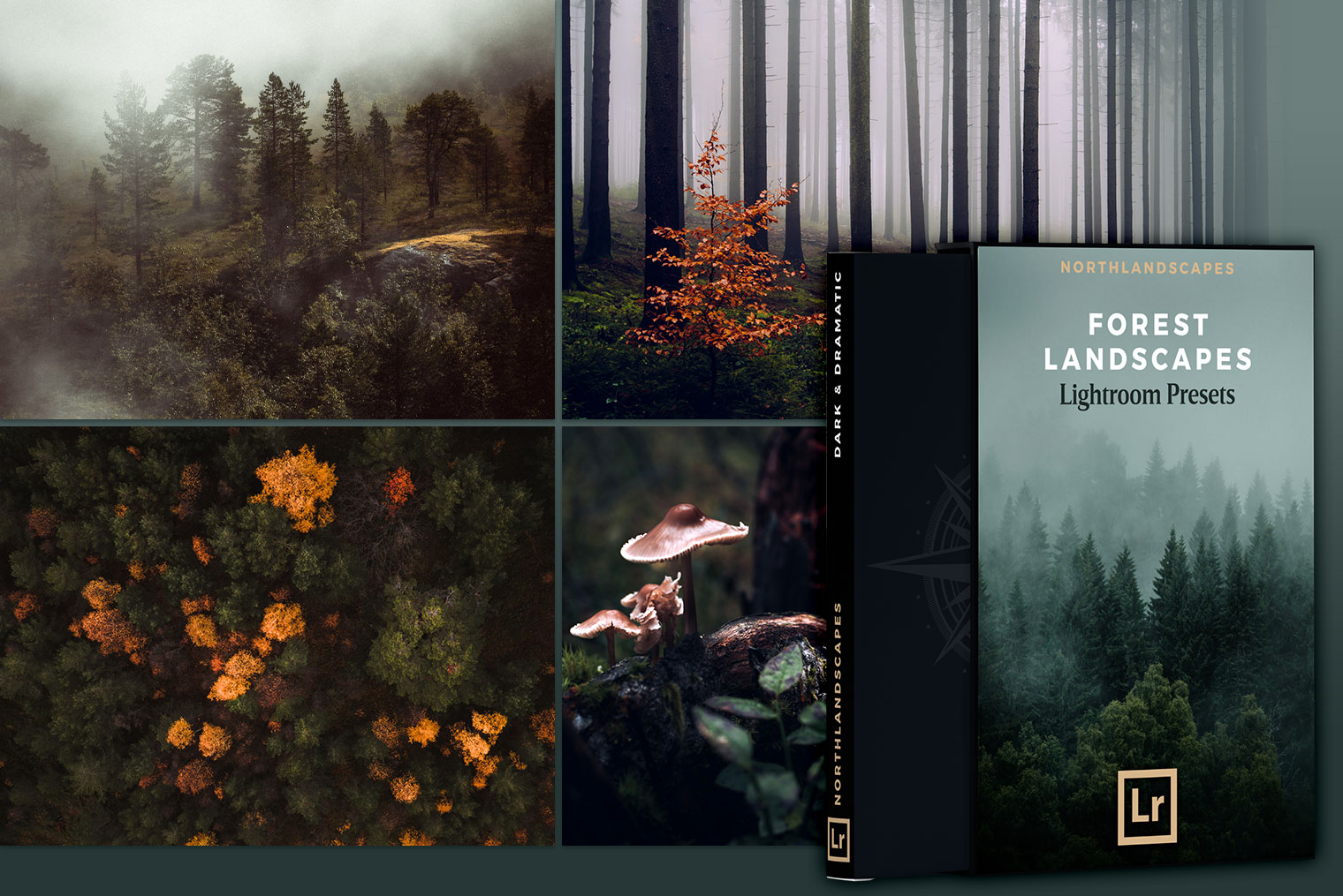 Lightroom Presets for Forest Landscapes