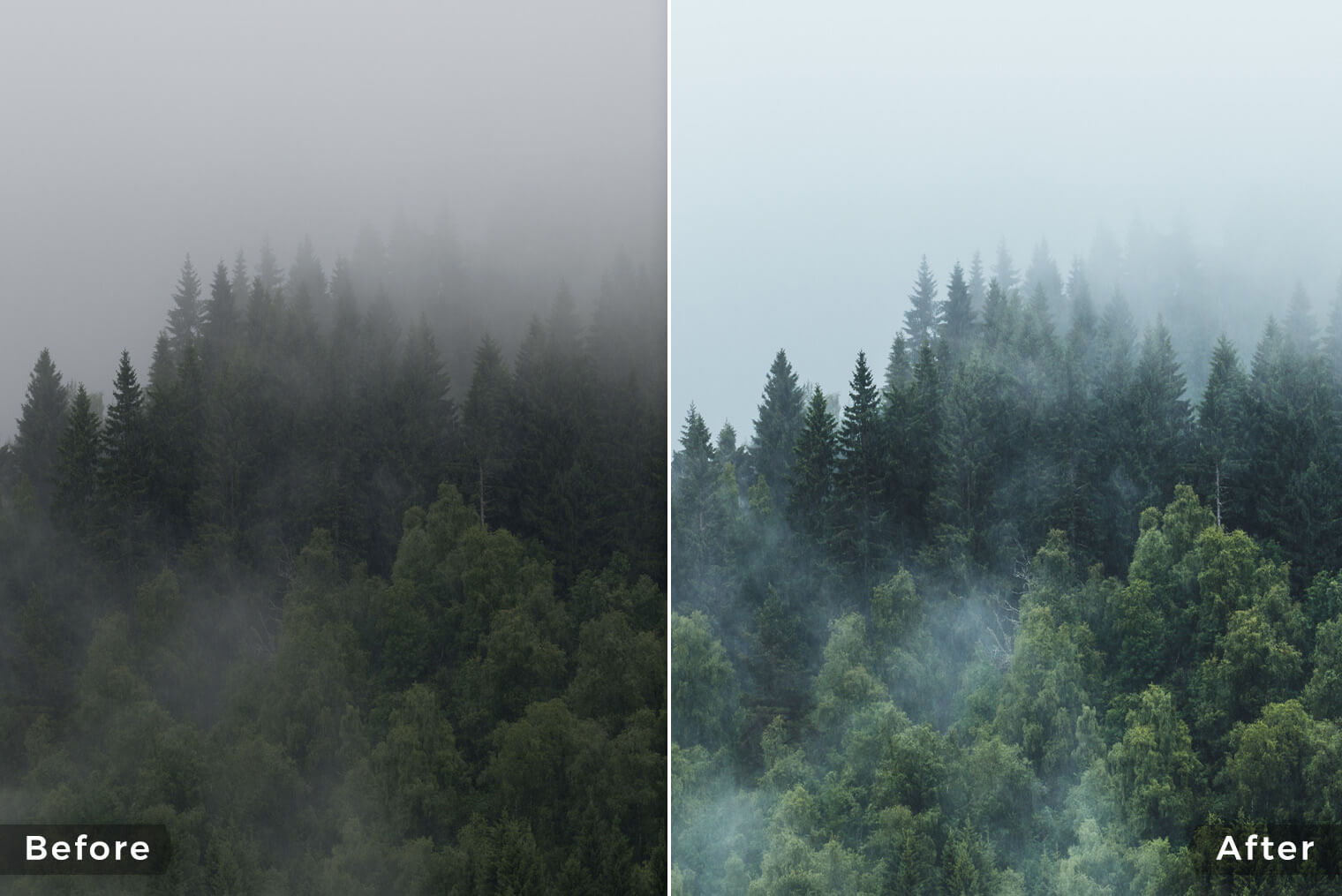 Lightroom Presets for Moody Forest Photography