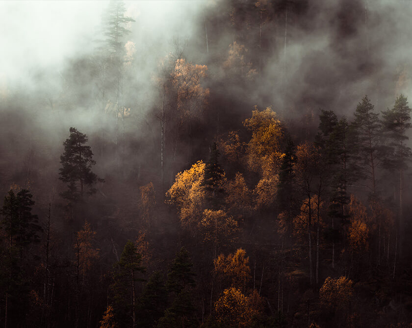 Moody Forest in Norway with Clouds and Fog